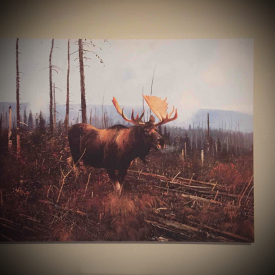 Large canvas moose picture